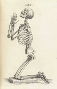 Title: Osteographia, or The Anatomy of the Bones [credit: Wikimedia Commons]